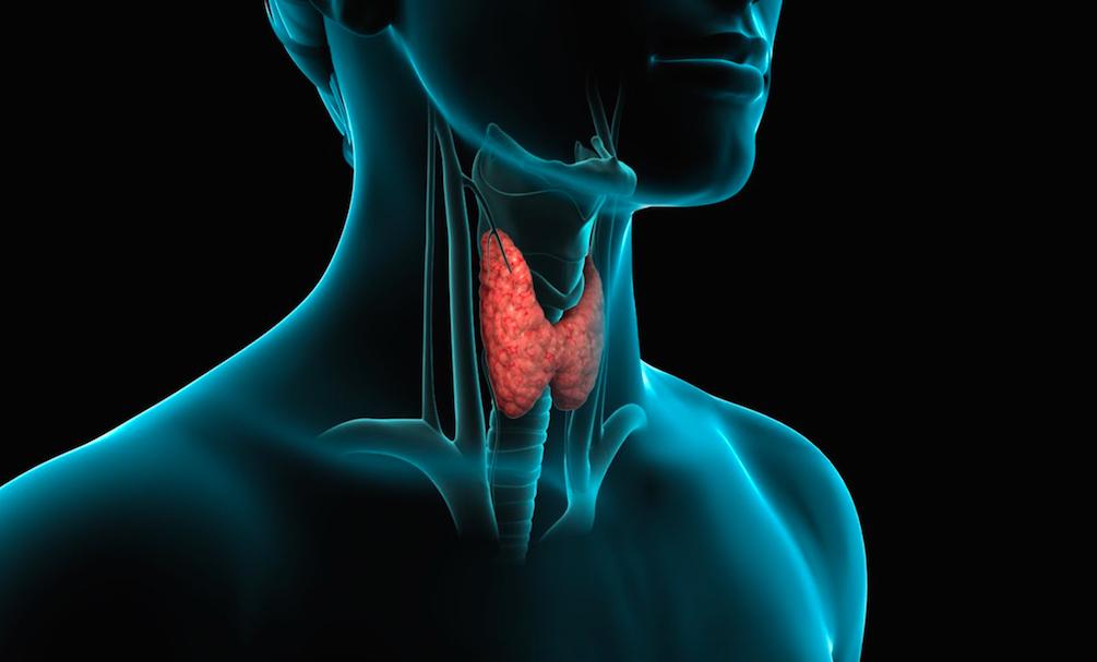 Che cosa è la Tiroide e le sue malattie